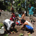 Children in Polle Island watched the sweet potato planting demonstration.