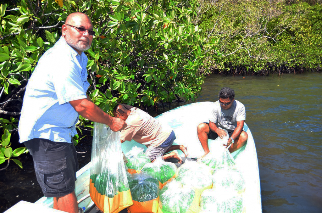 CRE- Vice President  Thomas Taro and aquaculture staff Dannies Uehara and Lyndon Masami releasing the chemang crablets near the mangroves at Ngemai Conservation Area.