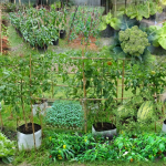 A collage of household gardens – A Real Homeland Security!