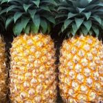 In vitro mass-scale, disease-free pineapple seedling production: Research and multiple demonstrations on sustainable, climate-smart and organic commercial cultivation